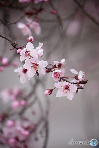 Mùa Xuân Về Anh Sẽ Hát Bâng Khuâng